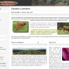 Lavandera Cattle Breeding